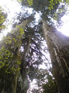Tree_c0197505_0342747.jpg