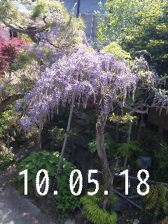 我が家の庭。_d0148408_2141311.jpg