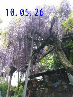 我が家の庭。_d0148408_2141342.jpg