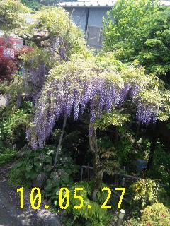 我が家の庭。_d0148408_2141344.jpg