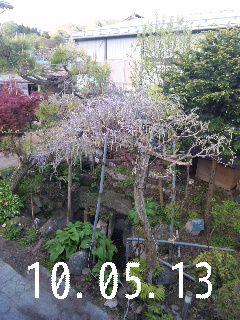 我が家の庭。_d0148408_2141350.jpg