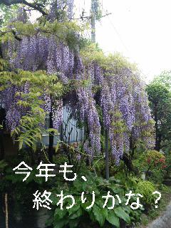 我が家の庭。_d0148408_2141395.jpg