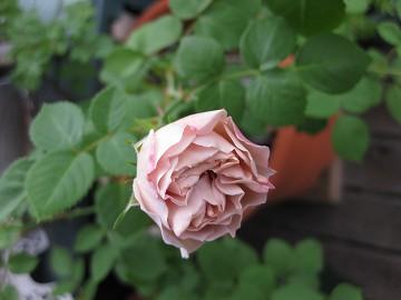 f0116409_1734387.jpg