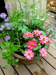 夏野菜と花のコンテナ_f0236311_722257.jpg