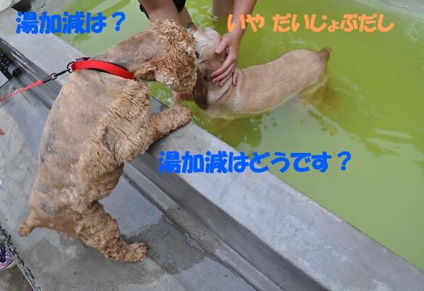 b0067012_2030401.jpg
