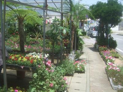 園芸店へ。_f0178416_1311156.jpg