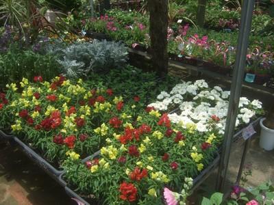 園芸店へ。_f0178416_13134852.jpg
