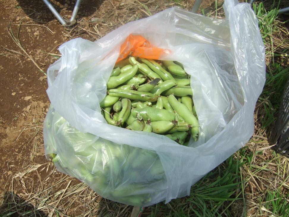 成長した野菜に支柱,,,,,ゲストも来園!_b0137932_21404218.jpg