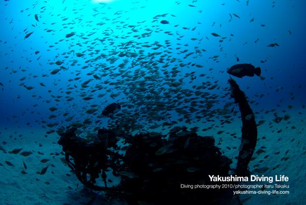 青が戻ってきた!漁礁には小魚の群れ!!_b0186442_12385478.jpg