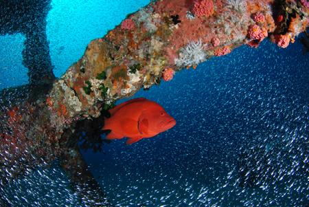 青が戻ってきた!漁礁には小魚の群れ!!_b0186442_12592662.jpg