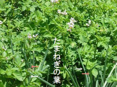 収穫_a0089450_12593790.jpg