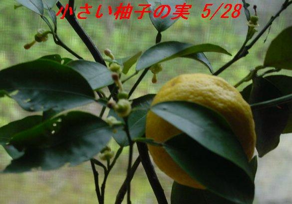 f0179357_1024277.jpg