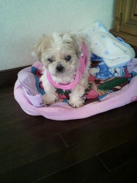 愛犬ココちゃん_b0106766_17364046.jpg