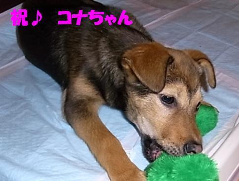 第82回ちばわんいぬ親会in品川のご報告_d0027698_1635431.jpg