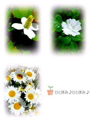 e0136420_20122648.jpg