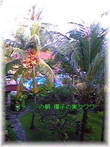 d0035823_1632259.jpg