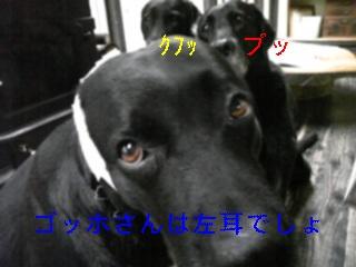 ゴッホ_f0148927_19181439.jpg