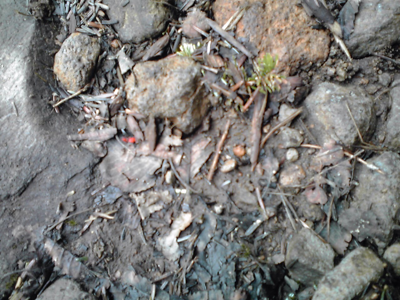 謎の赤い虫_e0155231_1041345.jpg