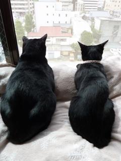 キスする黒猫 のぇるろった編。_a0143140_23521020.jpg