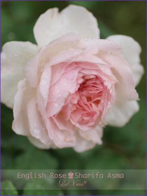 庭の花_e0158653_22325949.jpg
