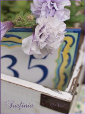 庭の花_e0158653_2341694.jpg