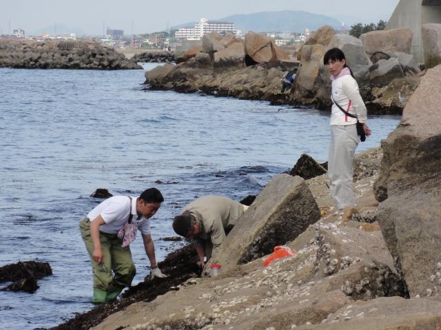 第3回大阪湾生き物一斉調査 in せんなん里海公園_c0108460_23343972.jpg