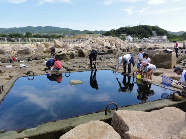 第3回大阪湾生き物一斉調査 in せんなん里海公園_c0108460_23345827.jpg