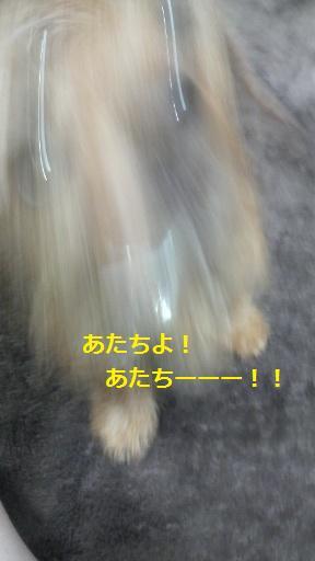 d0150161_2049597.jpg