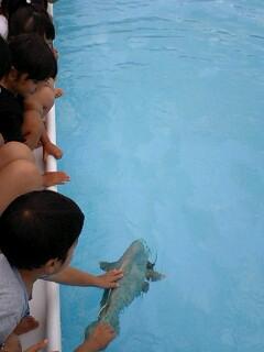 林正道さんの魚ロボット_e0131462_23145372.jpg