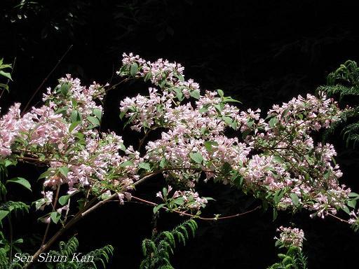 今、山で咲いている花_a0164068_23295730.jpg