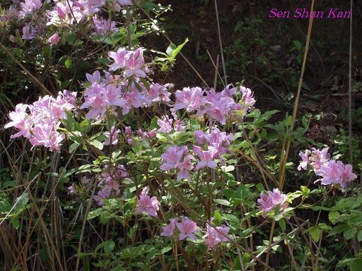 今、山で咲いている花_a0164068_23312684.jpg