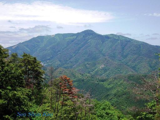 今、山で咲いている花_a0164068_23351315.jpg