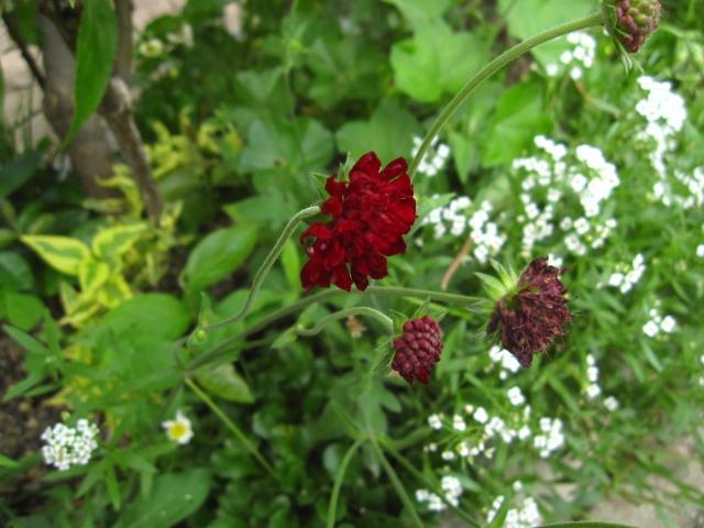 初夏の赤い実_e0181373_21163562.jpg