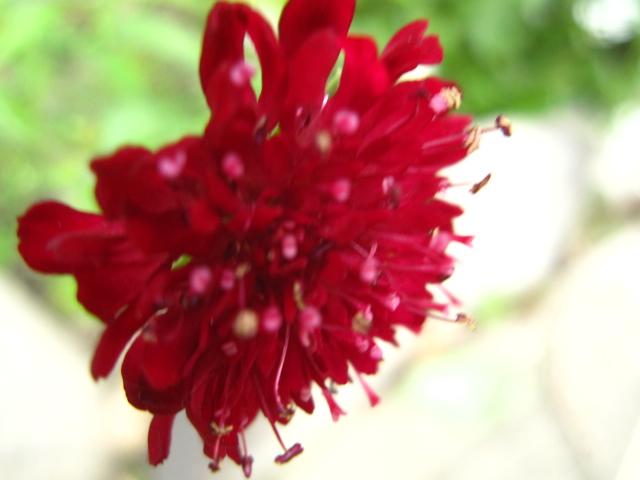 初夏の赤い実_e0181373_21174443.jpg