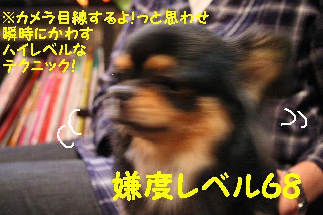 b0130018_1083469.jpg