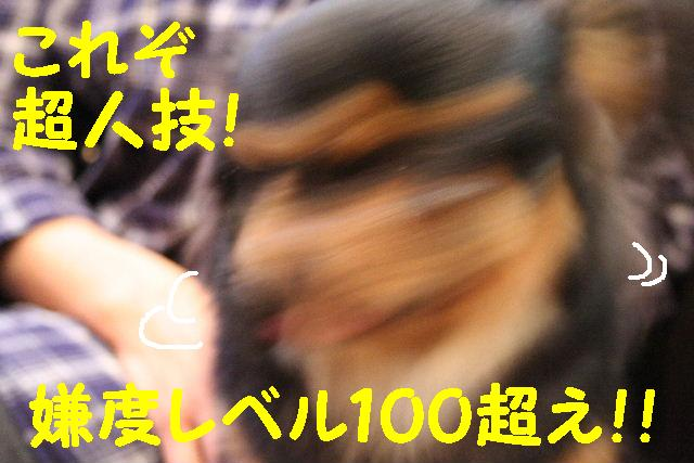 b0130018_1084134.jpg