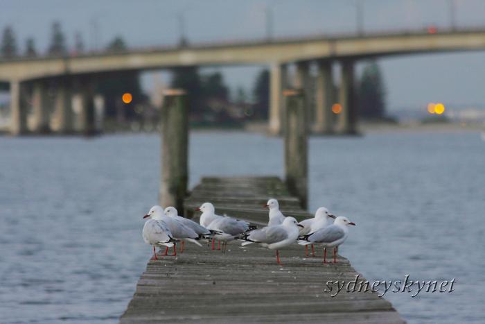 Sylvania Water Jetty_f0084337_239641.jpg