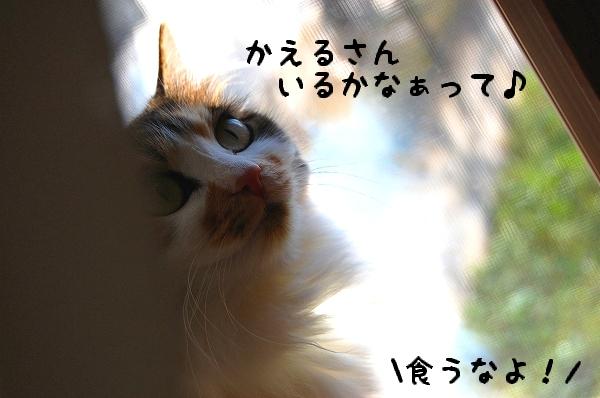 c0181639_151487.jpg