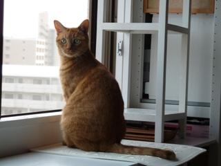 ムスタファ猫 しぇる編。_a0143140_21103945.jpg