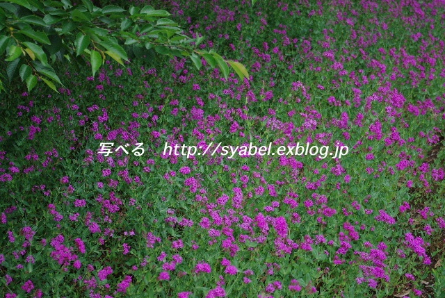 c0153764_7114535.jpg