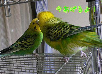 f0196665_23532038.jpg