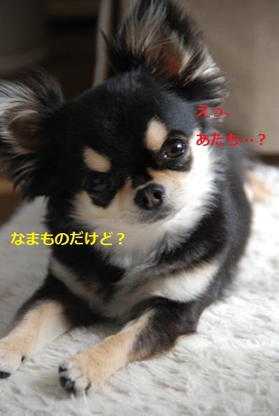 f0065768_14291047.jpg