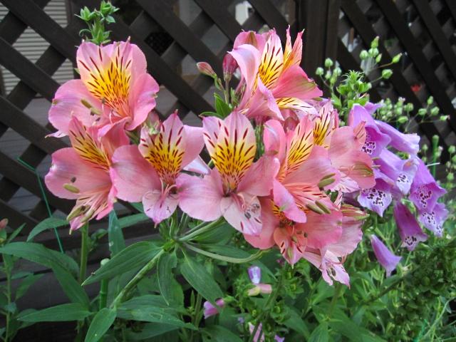 ピンクの花々_e0181373_21152660.jpg