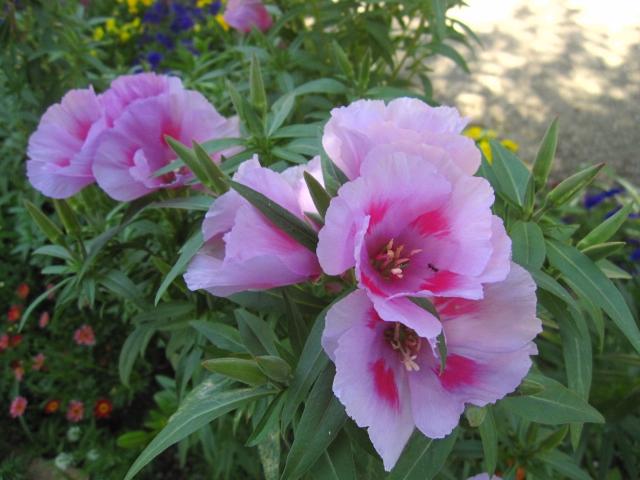 ピンクの花々_e0181373_21193425.jpg