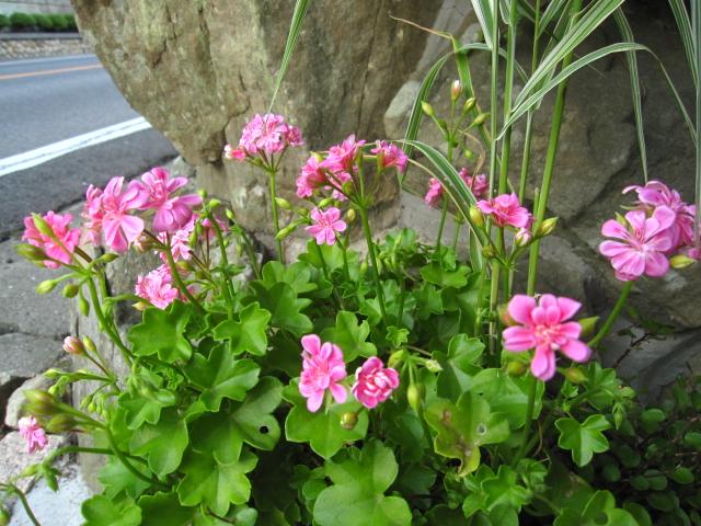 ピンクの花々_e0181373_2171961.jpg