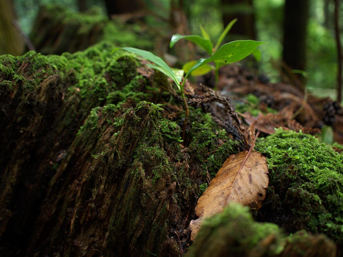 森の奥_f0121181_23402728.jpg