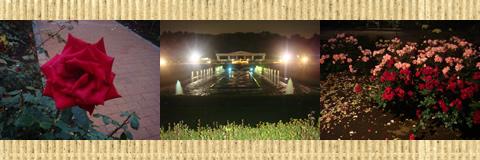 神代植物公園 (調布市)_d0132289_13122618.jpg