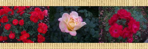 神代植物公園 (調布市)_d0132289_13125640.jpg