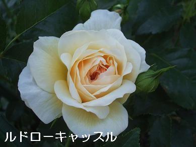 f0179203_14263647.jpg