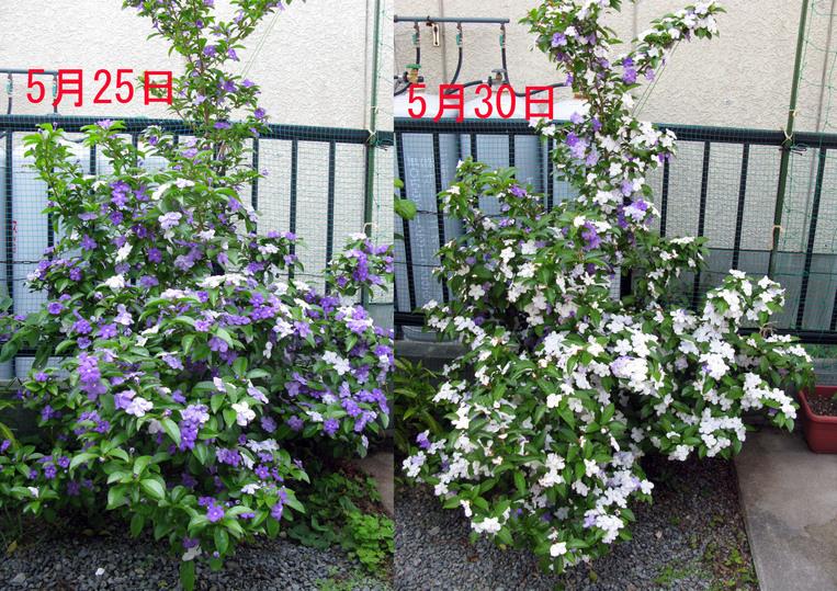 花の色は~!_f0129726_22584628.jpg